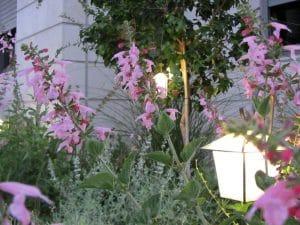 סיגליות עיצוב גינות - תאורת גן